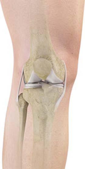 Knee Anatomy   Knee Treatment Cincinnati   Knee Surgeon Cincinnati, Ohio